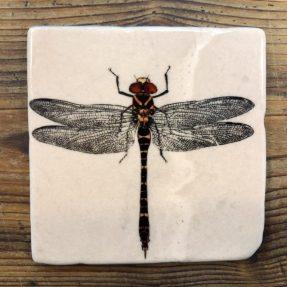 "Henri Banks - Marmorfliese ""Libelle"""