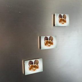 Feige 6x4 Magnet