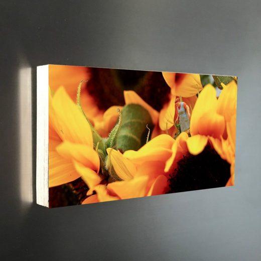 Sonnenblume-Gärtnerin 20x10 Diagonal